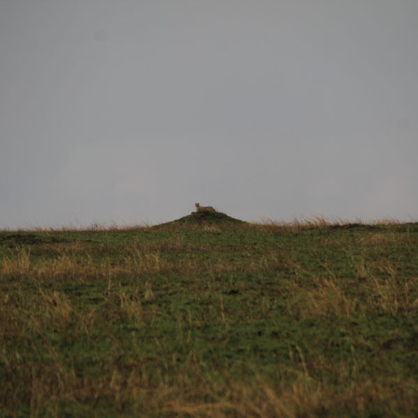 ¿Veis la silueta del guepardo sobre el montículo?