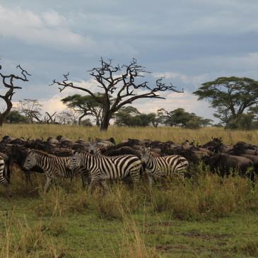 Safari en Tanzania (días 431-437)