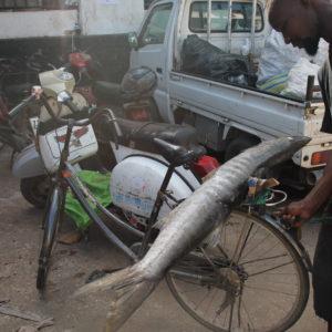 Coincidimos con este pescador que transportaba en bicicleta la pesca del día