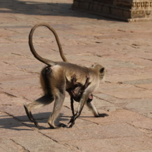 Estuvimos rodeados de un montón de monos, como esta mamá con su bebé