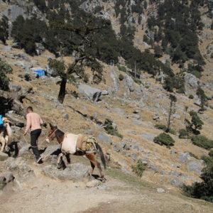 ¡Pobres burros lo que sufrirían subiendo! ¿Tal vez menos que nosotros?