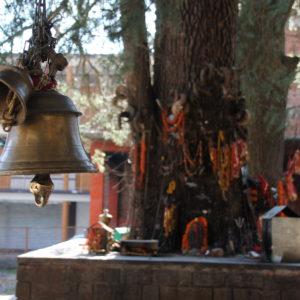 """Cerca del templo encontramos este otro """"templo árbol"""""""
