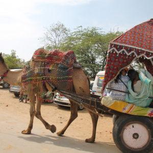 La mayoría de gente que usaba estos carros de camellos eran indios, sorprendentemente