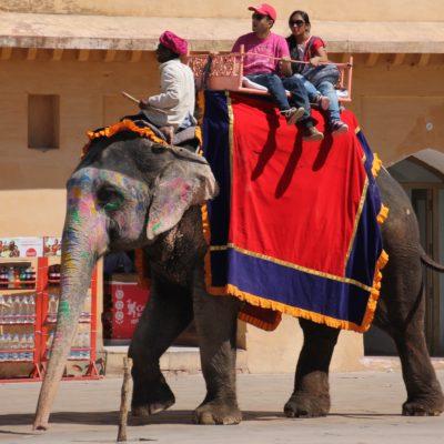 Elefantes con la frente pintada subiendo a turistas al fuerte