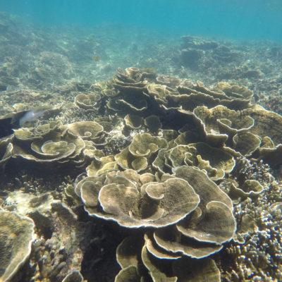 El coral tiene miles de formas diferentes, como este en forma de flor
