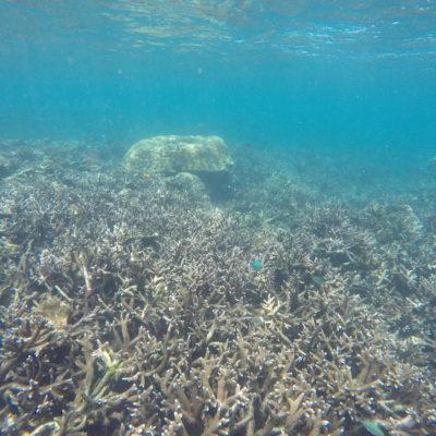 ¿Y qué nos decis de este coral en forma de arbolitos?