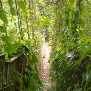 No se puede decir que el puente estuviera en las mejores condiciones, pero la vegetación le daba un toque muy de selva