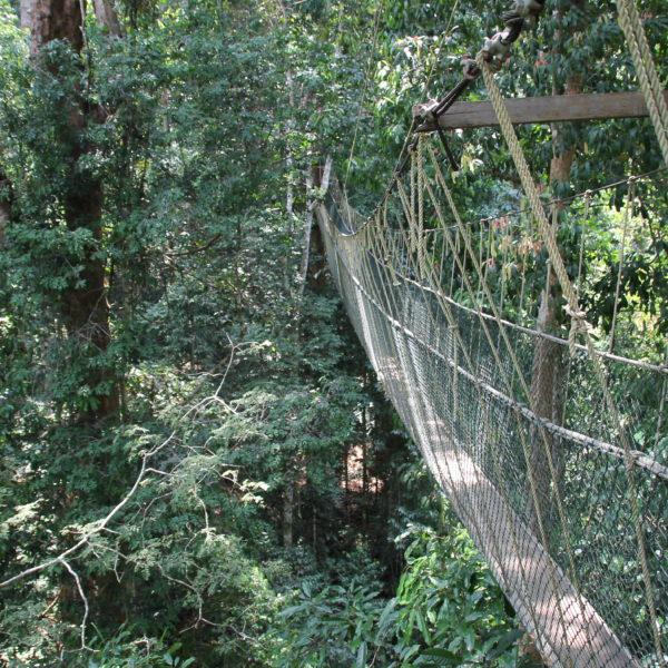 El canopy son estos puentes colgantes a bastante altura del suelo que recorren una minúscula parte del parque