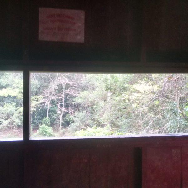 Nuestra ventana para espiar la vida salvaje del parque
