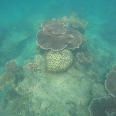 ¿Y que decis de estos corales que parecen un cerebro?