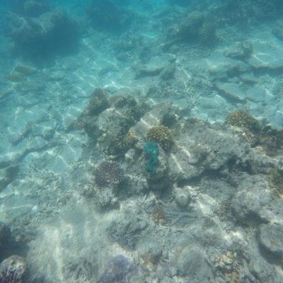 ¡Cuánto color hay en la vida submarina!