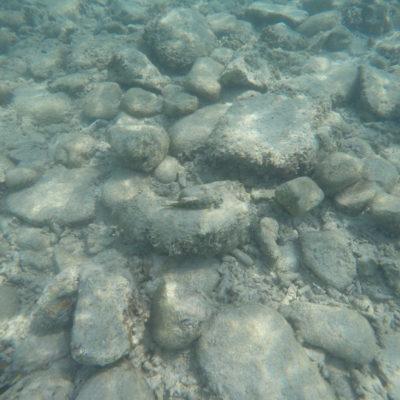 ¿Encontráis al pez camuflado?