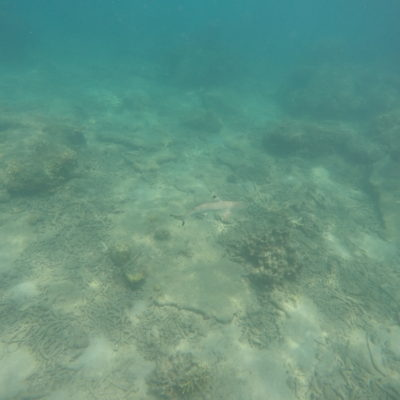 Los tiburones de coral nos tuvieron entretenidos varios días