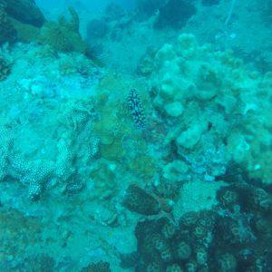 Pero bajo el mar no hay sólo peces, también hay otros seres como este nudibranquio
