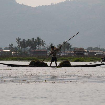 Pero no todos son pescadores, en el lago Inle también hay quien se dedica a sacar todas las hierbas que flotan sobre el agua