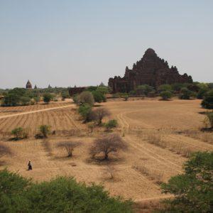 Es curioso ver como la gente local trabaja los campos que rodean los templos, mientras los turistas corretean en sus motos