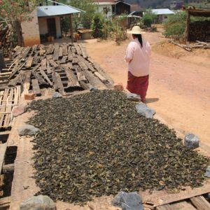 Muchas familias de la zona viven del té y lo secan al sol de esta manera