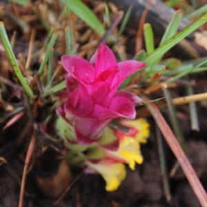 Los pétalos de esta flor la comen en ensaladas, aunque nosotros no lo vimos en ninguno