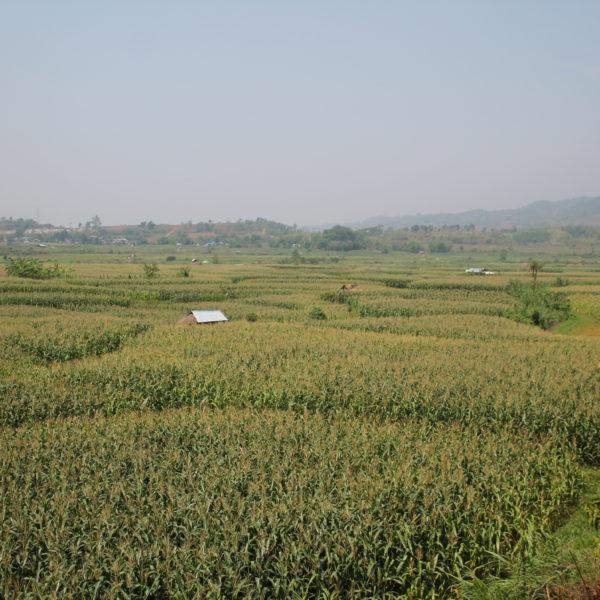Verdes campos hasta el horizonte
