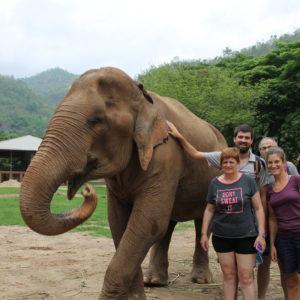 Pudimos tocar a algunos de los elefantes, siempre mientras les daban de comer