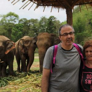 Pudimos estar cerca de los elefantes mientras comían