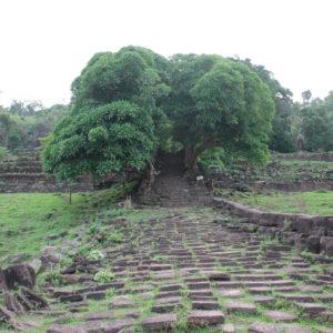 Los árboles llevan tanto tiempo aquí que se entremezclan con las rocas de una manera asombrosa