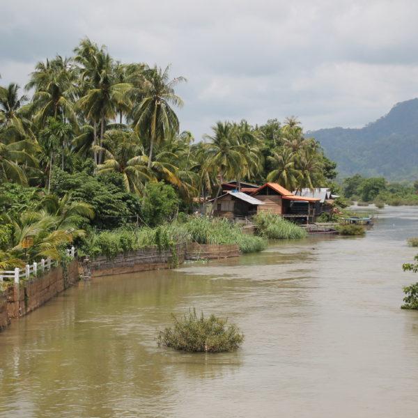 Abundan las palmeras que le dan un toque tropical y salvaje
