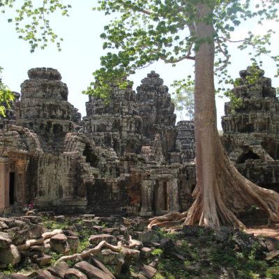 Incluso los árboles que no están enredados en los templos hacen de Angkor Wat un lugar aún más mágico