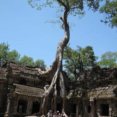 ¿Cómo han podido crecer los árboles en Ta Prohm de esta manera?