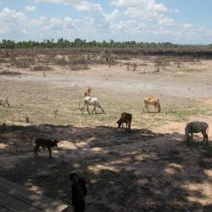 Este lugar donde pastan las vacas también salía reflejado en nuestro mapa como un gran espacio azul
