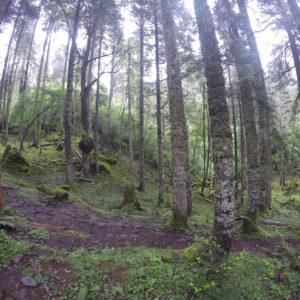 En la primera parte se recorre un bosque que nos recordó mucho a Euskadi