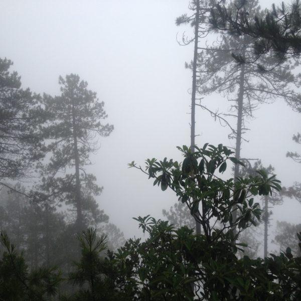 Aunque confiábamos que en el regreso de Yubeng tendríamos más vistas, nos volvimos a encontrar con la niebla