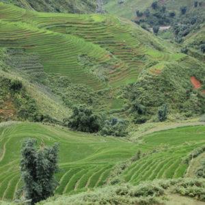 Las famosas terrazas de arroz cubren todas las laderas