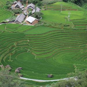 El verde intenso de los campos hipnotiza
