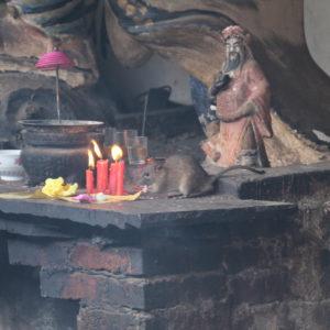 Y las mujeres no eran las únicas presentes en el ritual... ¡Cuantas ratas!