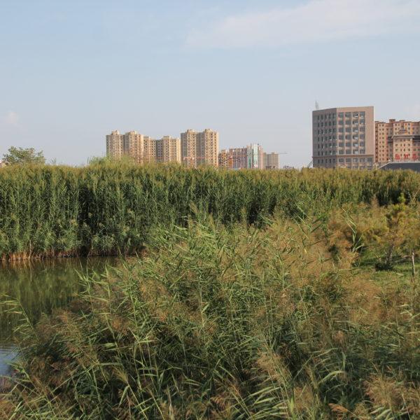 Llama la atención lo cerca que está del centro de Zhangye y lo tranquilo que se está al mismo tiempo