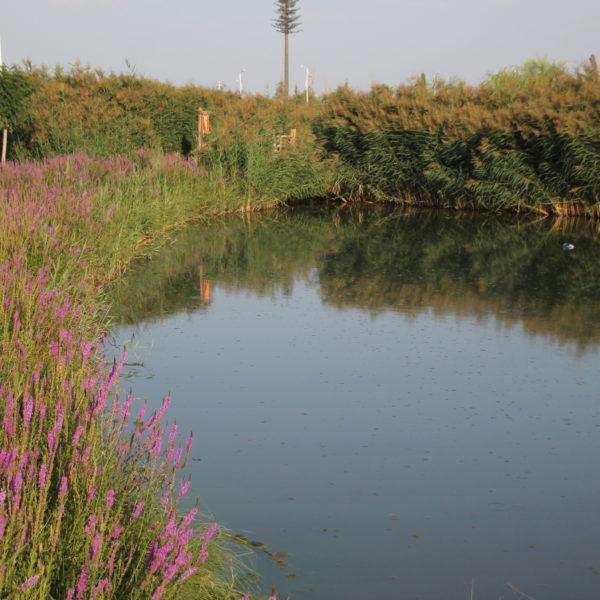 Los wetlands son un lugar tranquilo para relajarse