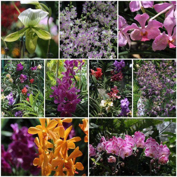 El jardín de orquídeas nos gustó mucho
