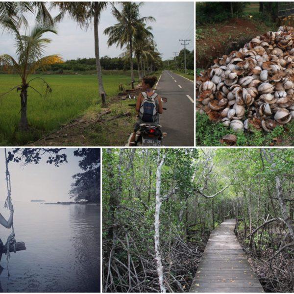 El recorrido en moto nos mostró cosas curiosas de la isla como los manglares o pilas de cocos secos que no sabemos para qué usarán