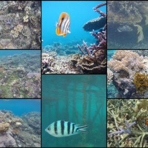 El snorkel fue de mejor a peor, pero pudimos ver muchos peces y grandes zonas de bonito coral