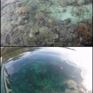 El agua era tan transparente que desde el barco se podía ver el coral bajo el mar