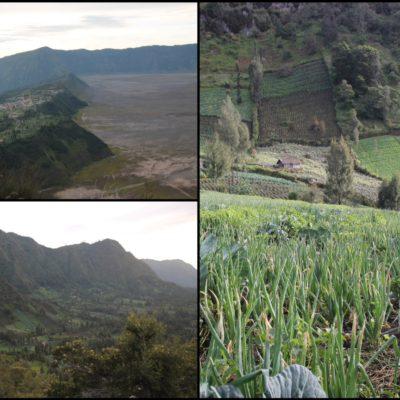 Los campos de agricultura y el borde de la caldera Tengger