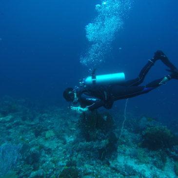 Buceando en Komodo (días 264-269)