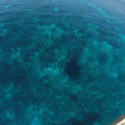 En lugares donde el agua era muy transparente, incluso pudimos ver mantas desde el barco