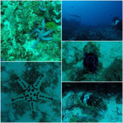 Bajo el mar también vimos estrellas, calamares gigantes...