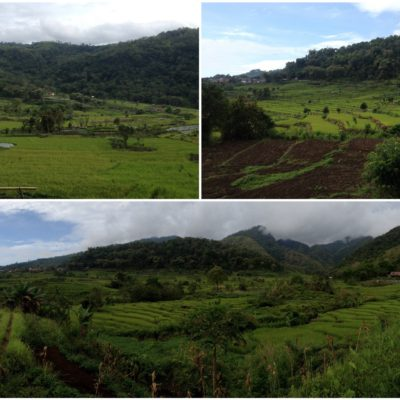 Bajando a Moni pudimos disfrutar de los verdes paisajes de las faldas del volcán